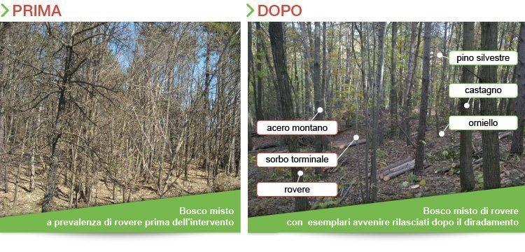 puliamo un bosco ecoprintweb