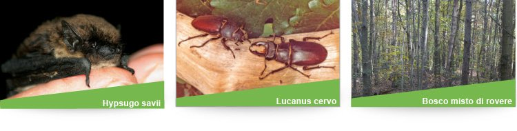 ettoyons la forêt - ecoprintweb